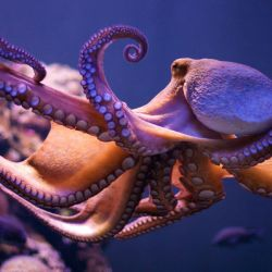 talent without discipline is like an octopus on rollerskates