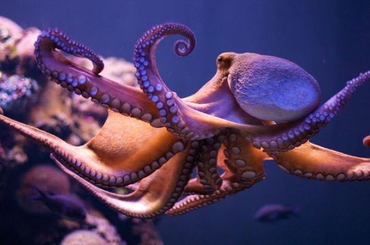talent without discipline is like a dancing octopus