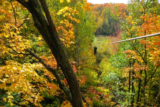 Man ziplining through Autumn trees